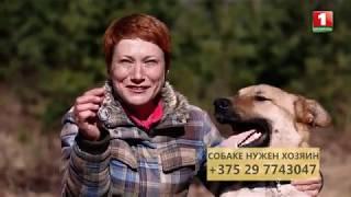 Евгения Синякина и ее питомец. Пес Добрыня ищет хозяев. Путь домой