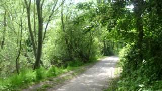 Wardruna - Bjarkan - An Oaken Dream