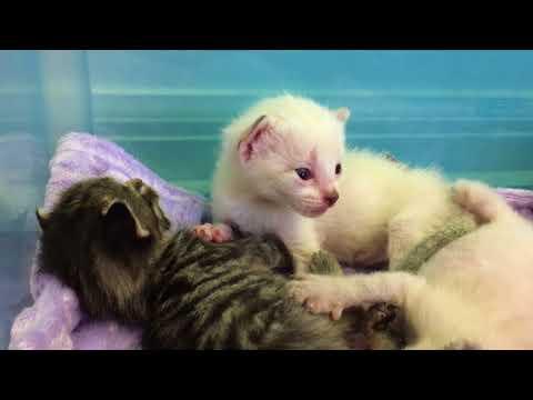 Baby Kittens! Eyes Open, Ears Closed!