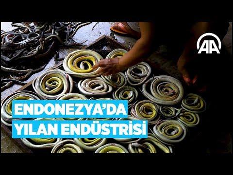 Endonezya'da yılan endüstrisi
