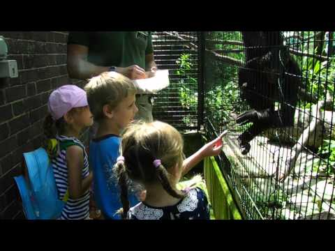 Feeding Spider Monkeys at London Zoo