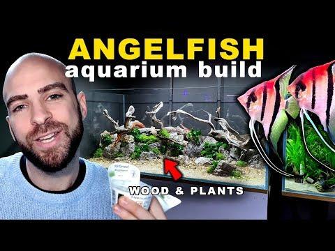 4FT ANGELFISH JUNGLE AQUARIUM #3 WOOD AND PLANTS || MD FISH TANKS