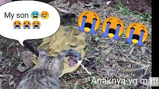 Mengharukan.Kucing ane tidak rela anaknya dikubur