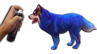 NTN - Thử Nhuộm Màu Lông Cho Gấu Alaska ( Dyed Alaska Dogs )