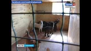 Вести-Хабаровск. Приют для бездомных животных
