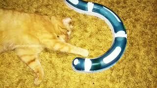 Игрушка,гонка для кота, будет розвличения для всей семьи 😉 Собака играла с удовольствием