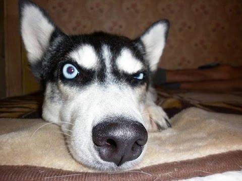 Прикол про собак))) - YouTube