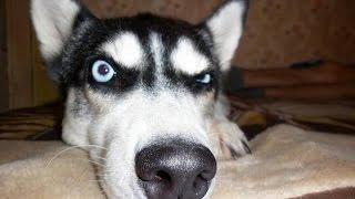 Сборник лучших приколов с собаками!
