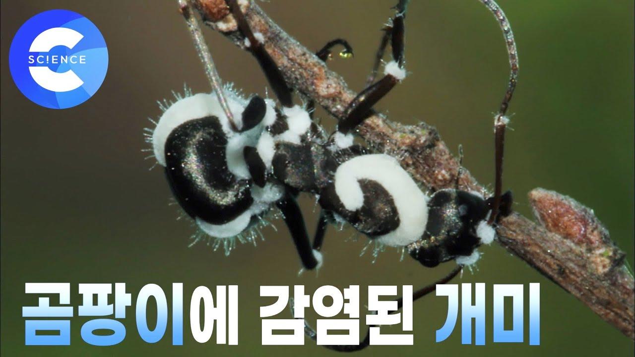 해가 지면 개미가 높은 곳으로 올라가는 이유는?