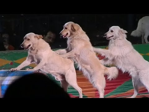 TRAINED  AND DISCIPLINED DOGS AT RUSSIAN CIRCUS