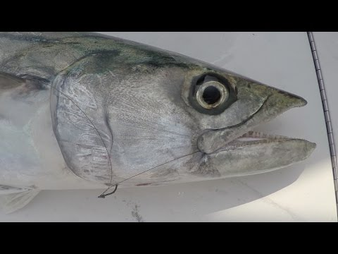 Fast And Furious Fishing In A Kingfish Tournament