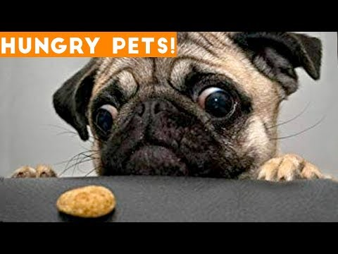 Funniest Hungry Pets Compilation 2018 | Funny Pet Videos