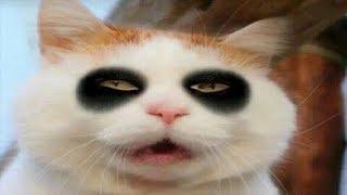 Những Hình Ảnh Hài Hước Về Mèo Sẽ Khiến Bạn Bật Cười