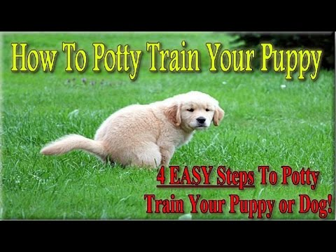 How To Potty Train a Puppy  ♥ 4 EASY STEPS ♥ How to House Train Your Dog :))))