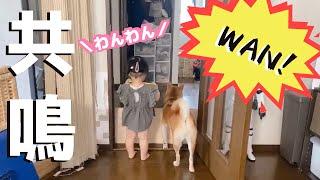 柴犬が吠え始めたと思ったら娘も隣に来てわんわん言い始めた