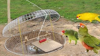 The First Primitive DIY Creative Parrot Trap Using  fan guard | Simple parrot Trap With  fan guard