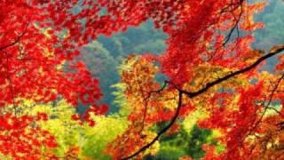 シングル『嗚呼初恋』のカップリング曲。 紅葉の季節になると聴きたくな...