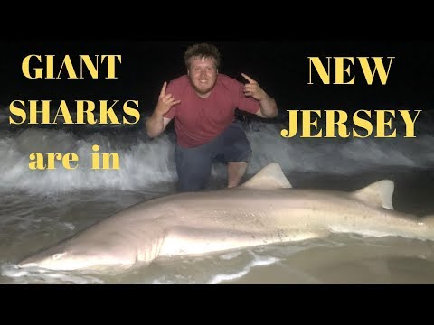 GIANT Sharks Are Swimming In New Jersey