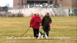 Dog Tracking Training: Lusi's First Lesson Working Towards Td Title
