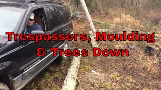 Off Grid Cabin Time: Trespassers and Trees Down