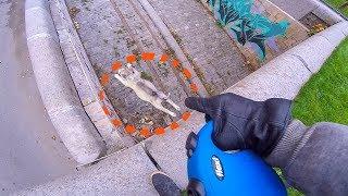 щенок упал с трёхметровой высоты на прогулке