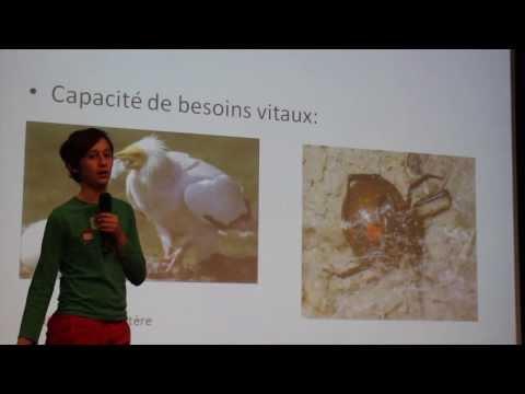 Introduction à La Zoologie