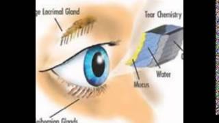 Vitamin A Supplements For Eyes