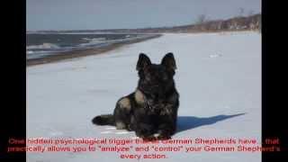 German Shepherd Potty Training Now