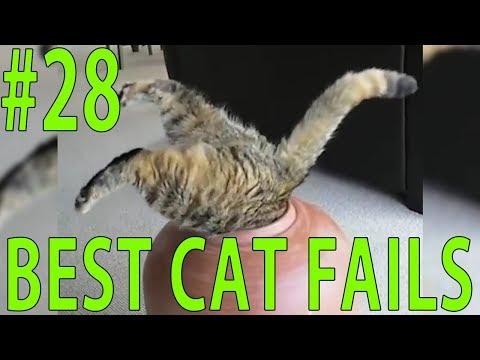 Best Cat Fails: #28 | FAIL.GROUP