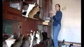 Жительница Татарстана приютила у себя дома 40 кошек