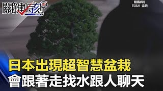 日本出現超智慧「盆栽」 會跟著走、口渴自己找水、還能跟人聊天!! 關鍵時刻 20180313-6 黃創夏 王瑞德