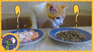 КАК ПРАВИЛЬНО КОРМИТЬ КОТА - домашняя еда против магазинной