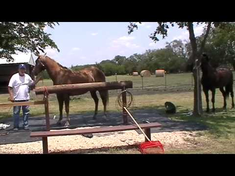 Is It Better To Have a Horse Love You & Not Listen or to Have a Horse Listen & Not Love You Now?