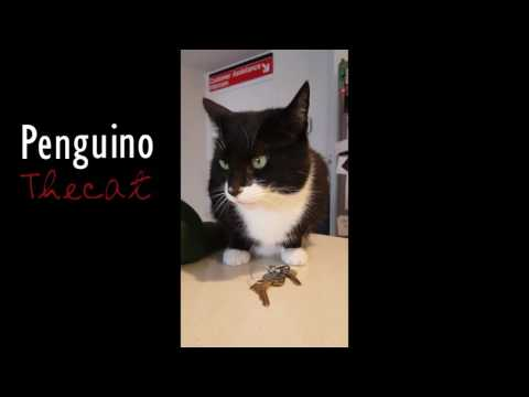 Scarsdale native Penguino has become an Internet sensation.
