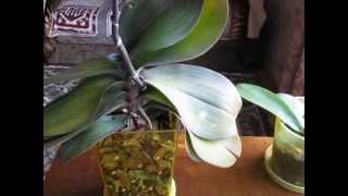 ГБРД_от_PTAha: мои цветы + пересадка орхидеи(Дорогие зрители! Это видео из плейлиста