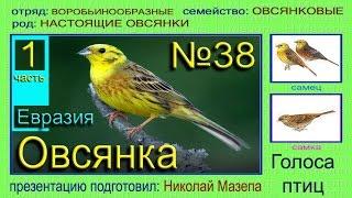 Овсянка. 1 часть. Евразия Россия. Голоса птиц