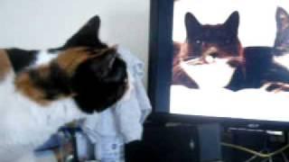funny animal videos