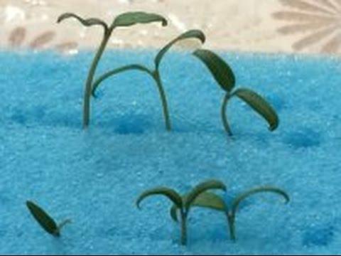 Вопрос: Как проращивать семена в губке?