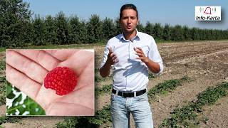 Komunikat jagodowy z dnia 25.07.2018