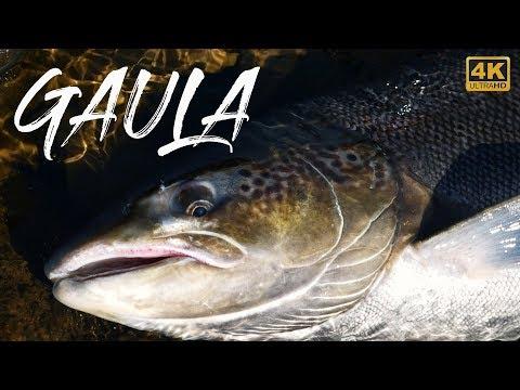 Laksefiskeri - MONSTER LAKS FRA GAULA (Part 1/2) | Atlantic Salmon Fishing