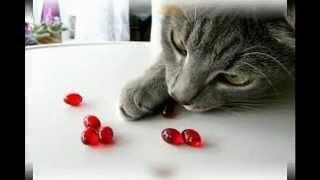 витамины для кошек для шерсти