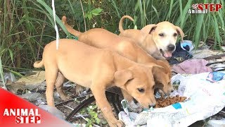 Three Puppies Rescued from the Wood and They Will Have New Good Life – Heartwarming!