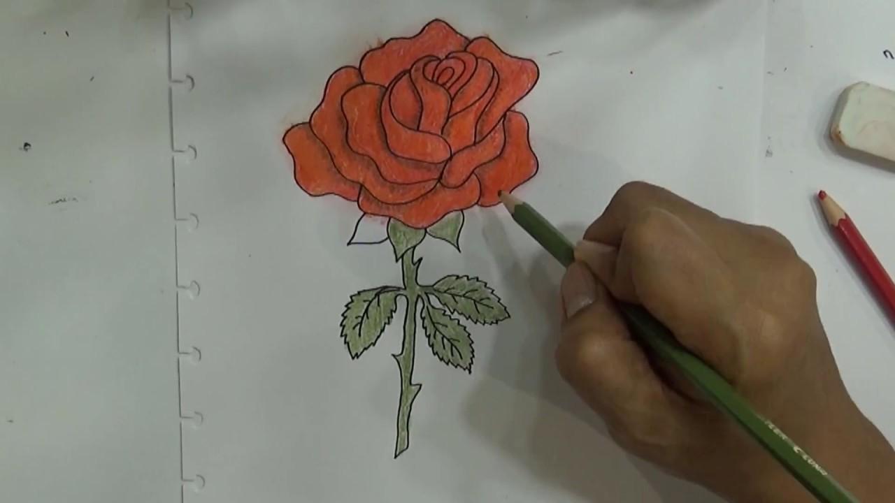 Belajar Cara Menggambar Dan Mewarnai Bunga Menggunakan Pensil Dengan