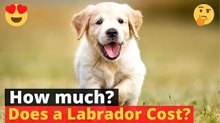 How much does a Labrador puppy cost?