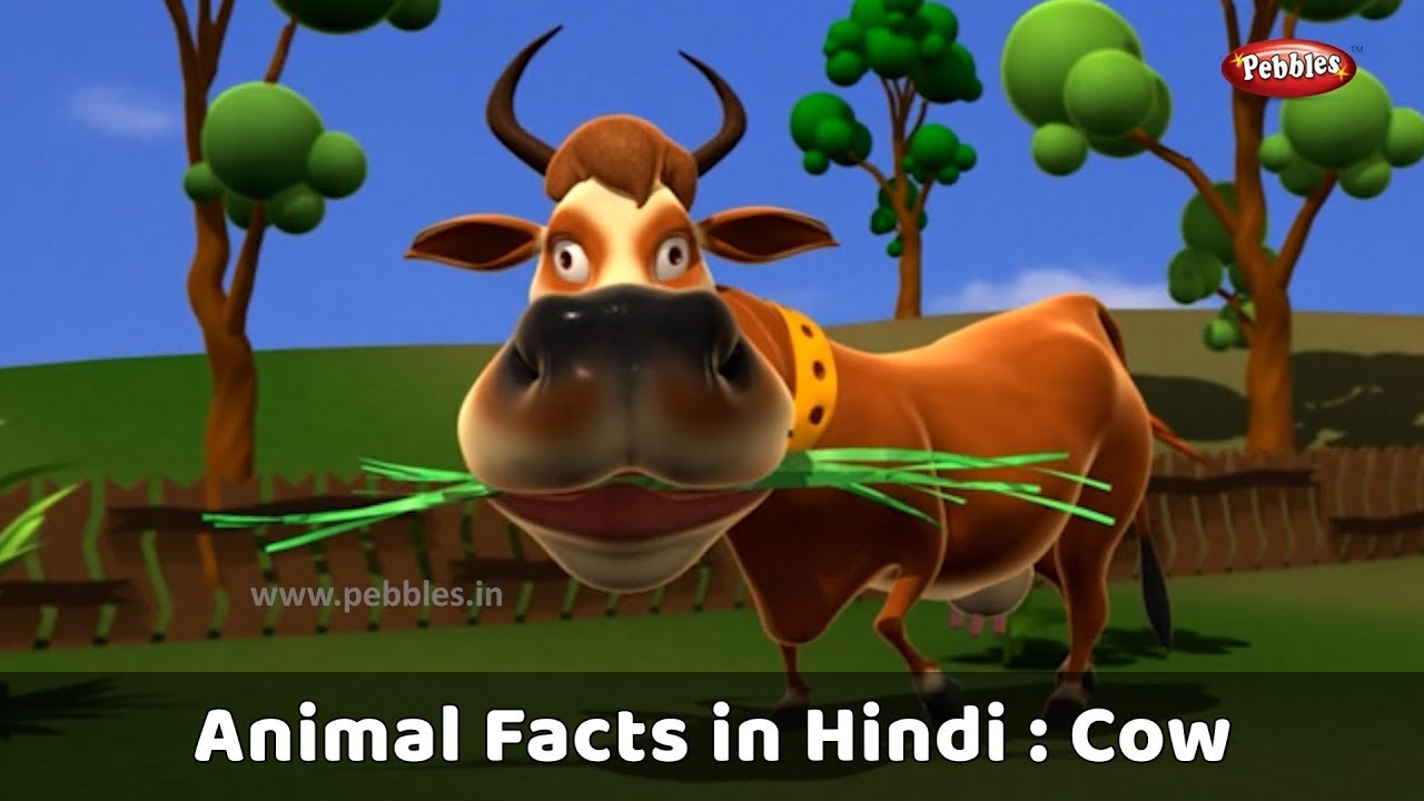 cow essay in hindi Hole-y cow guts could lead to holy grail for cheap biofuels.
