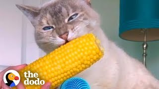 Cat ASMR Is So Relaxing | The Dodo | The Dodo