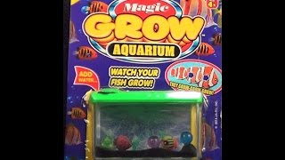 Video Watch The Magic Grow Aquarium Fish In Time Lapse Open and Use download MP3, 3GP, MP4, WEBM, AVI, FLV Agustus 2018