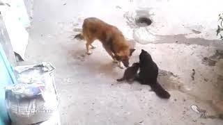 Кошка с детьми встретила старого друга.