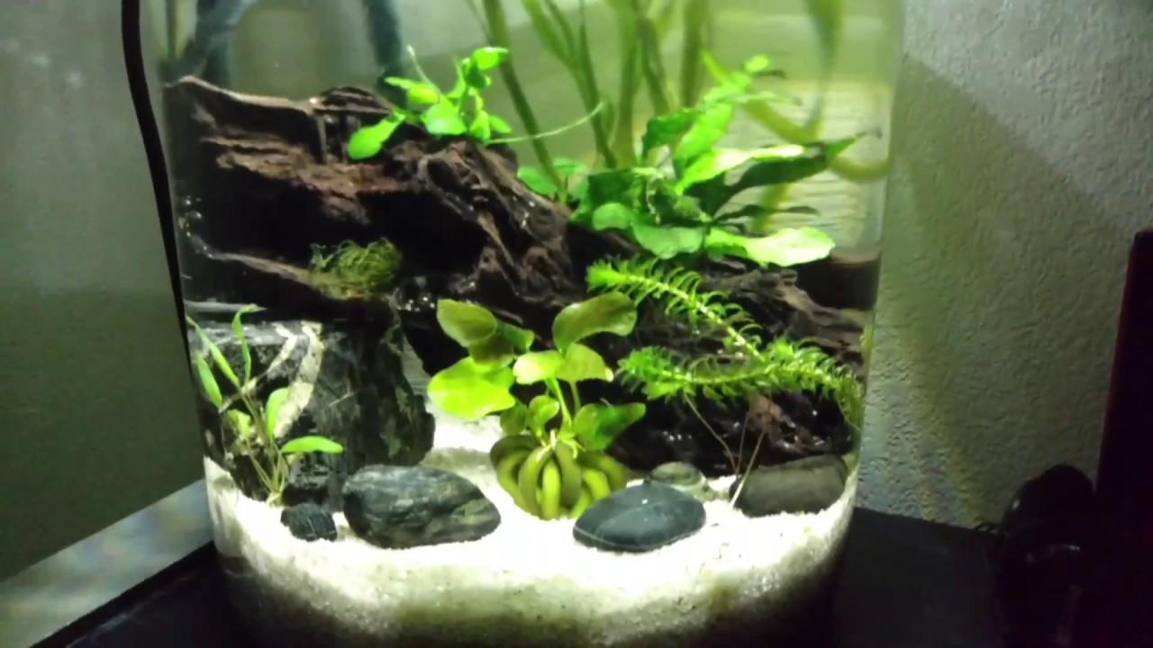 Jar Aquarium. - YouTube