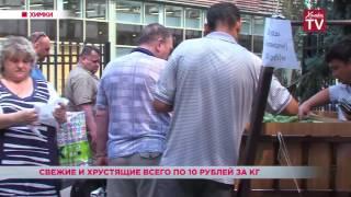 В Химках можно купить огурцы по 10 рублей за килограмм